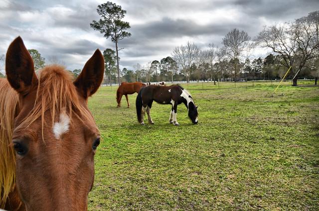 Horses from Flickr via Wylio