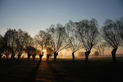 trees sunrise meadows silhouettes poland polska fields pola wielkopolska łąki sylweta sylwety wierzby wschódsłońca silhouettephotography