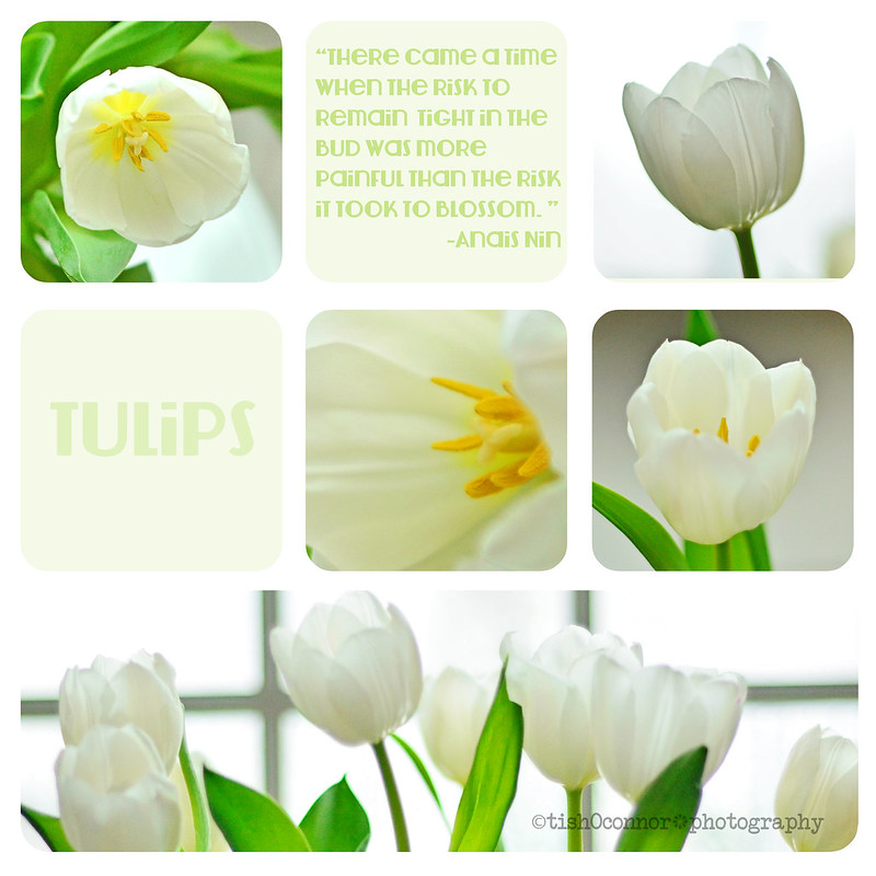 Tulips Spring Collage