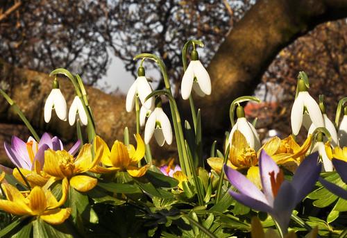 Frühlingsboten aus Bodenkrabbler-Perspektive
