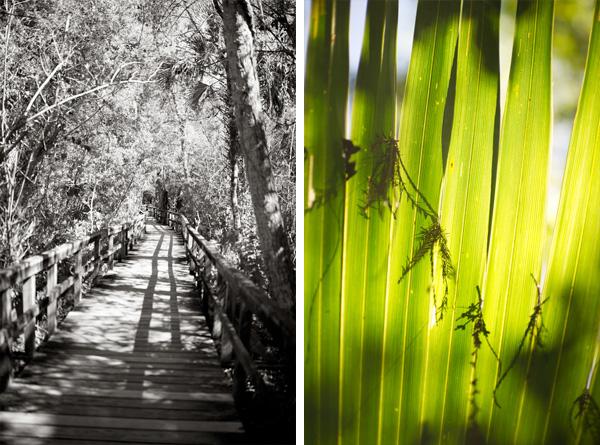 RYALE_Everglades-052