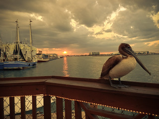 A pelican at sunset on the bay at Port Canaveral