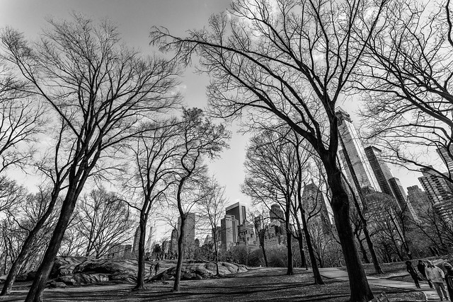 Central Park in Monochrome