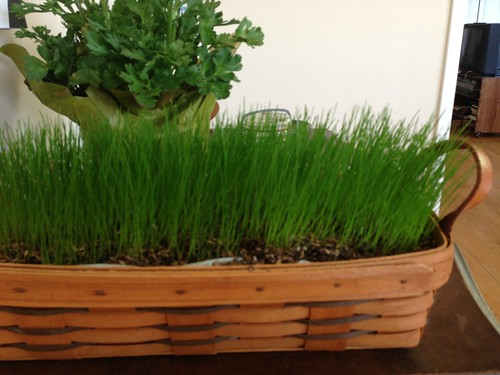 basket of grass