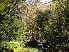 Karavostamo - Arethousa. 1st part of the hike (6)