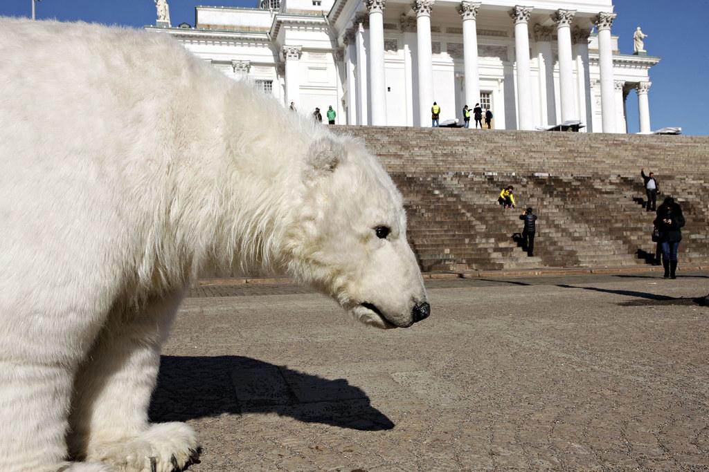 Paula the Polar bear in Helsinki, Finland