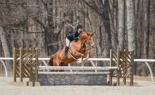 sports animal animals jumping mel equine equitation sweetbriarcollege annabelvoorhees