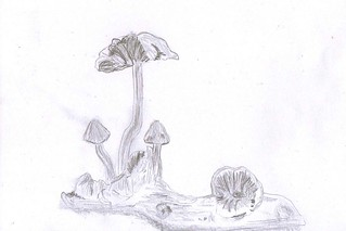 mushrooms by mm
