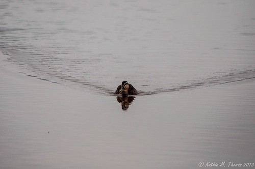Duck trails