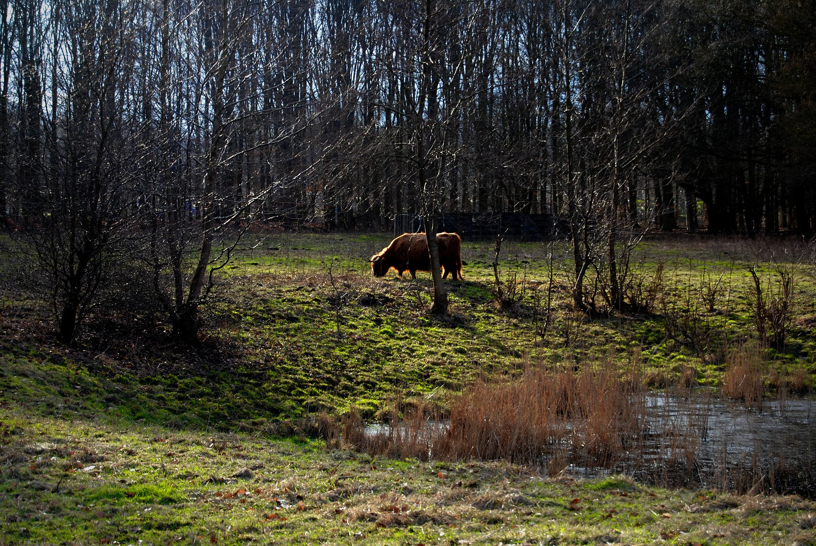 A Scottish Highlander in the Amsterdamse Bos.