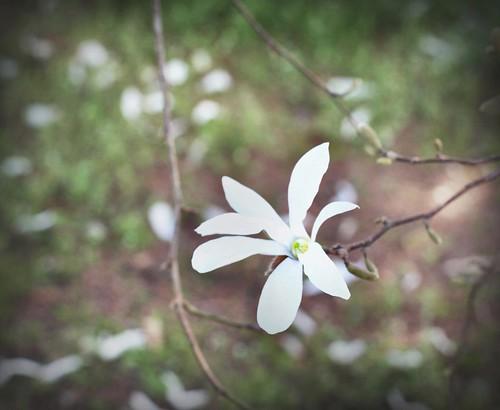 Inizi di primavera by kiara 78