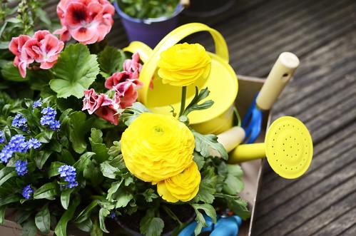 Blumen für den Garten * Flowers for the Garden