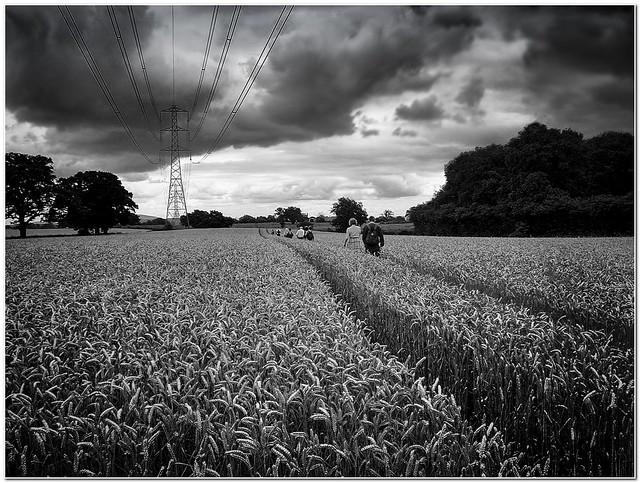 Treking the fields of barley