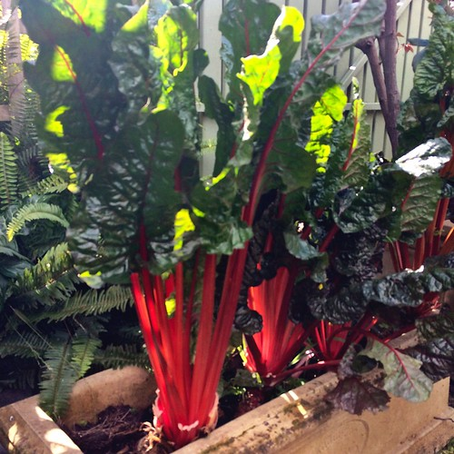 Kongwak Market: reds and greens