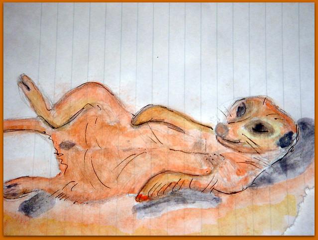 08-Meerkats and Owls Gufo, gufetto, suricato, suricati,