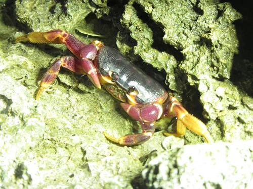 後灣棲息著珍貴的陸蟹(資料照片,邱郁文攝)