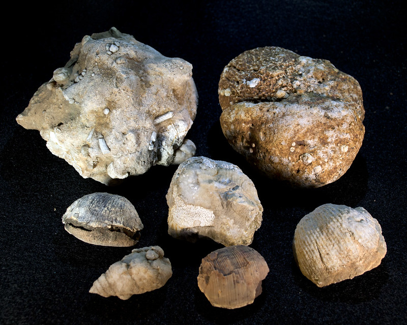 Fossils_0900