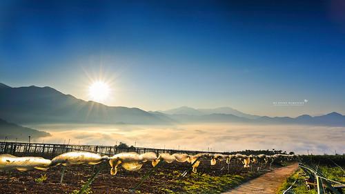 sea cloud sunrise ed landscapes nikon angle g wide taiwan super 28 nikkor 台灣 風景 afs puli 過年 農曆 雲海 日出 百香果 黑卡 swm 2013 1424 星芒 超廣角 d700 大三元 日芒