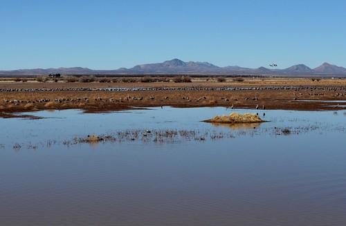 Establishing Shot: Whitewater Draw refuge, Cochise County, AZ - February 2013