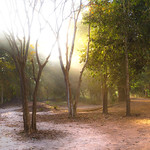 Forest at Sambor Prei Kuk