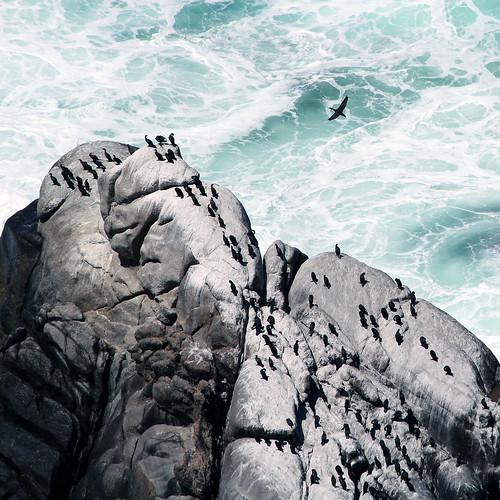 [フリー画像素材] 自然風景, 海, ビーチ・海岸, 鳥類 (その他), 動物 - 群れ, 風景 - 南アフリカ共和国 ID:201302201200