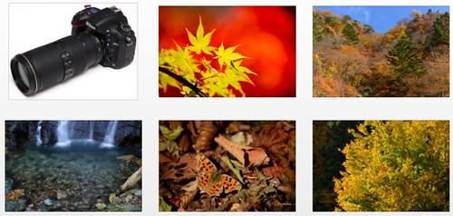 Nikon D600 plus Nikkor 70-200mm f/4G VR -- Full-resolution sample photos at Digital Camera Watch