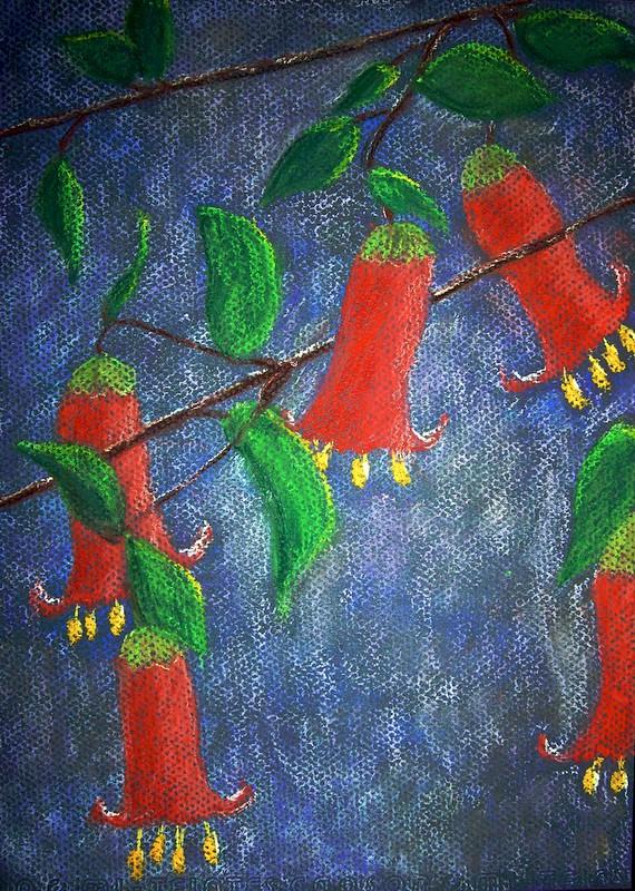 Correa Manii pastel painting