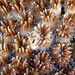 Red Sea Coral 25a by Alexander Semenov