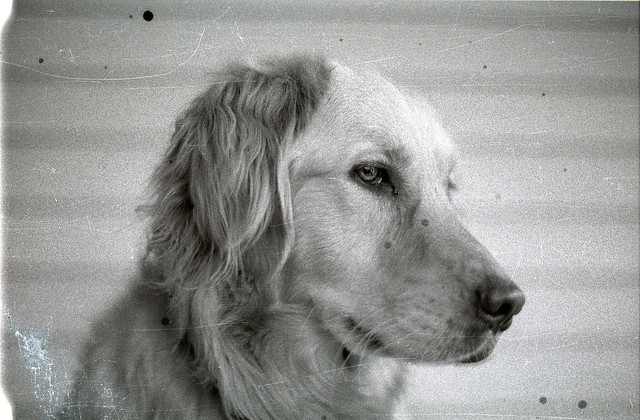 Bonnie (1998)