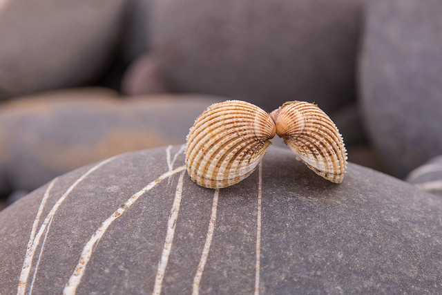 Kissing shells :)