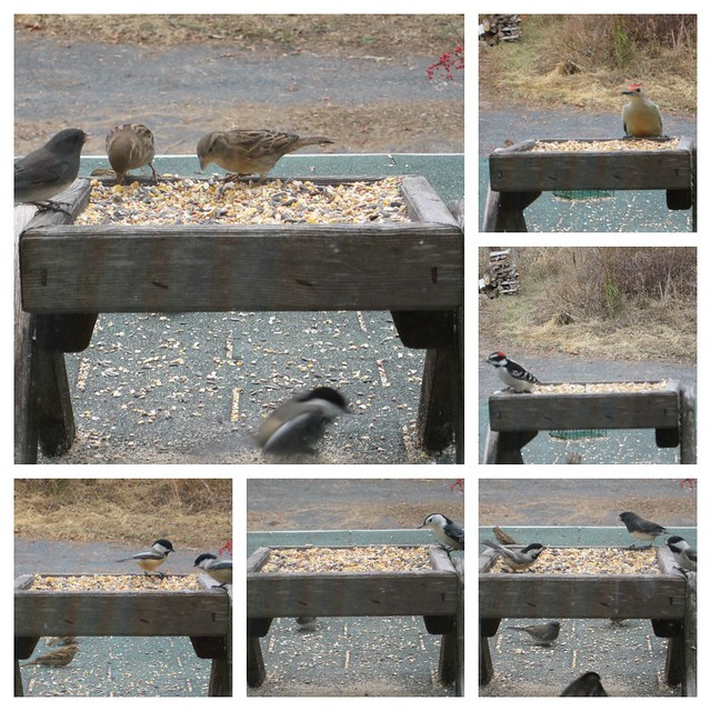 Birds at Feeder 10-29-12