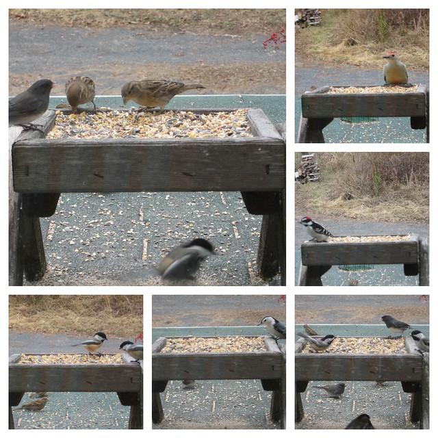 Birds at Feeder 10-29-12