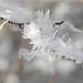 hoar-frost-detail-8