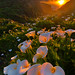 Calla Lily Valley, Big Sur by Yan L Photography
