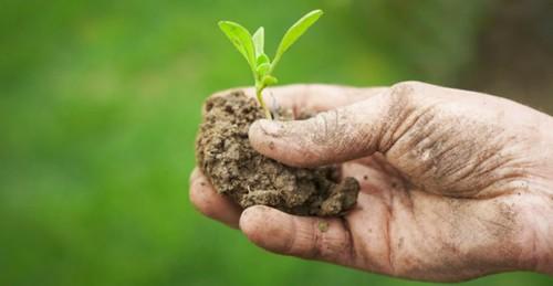 AGRICOLTURA. DOTTORINI: ENTRO APRILE I PREMI PER AZIENDE BIOLOGICHE, UNA BUONA NOTIZIA CHE GIUNGE CON UN RITARDO INTOLLERABILE