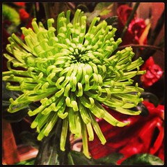 #flower #flemingsmayfair #mayfair #london #hotel