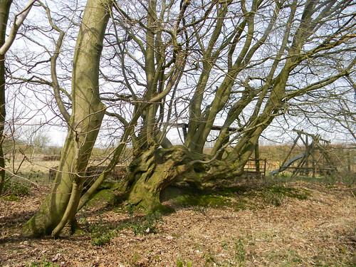 Overgrown hedgerow