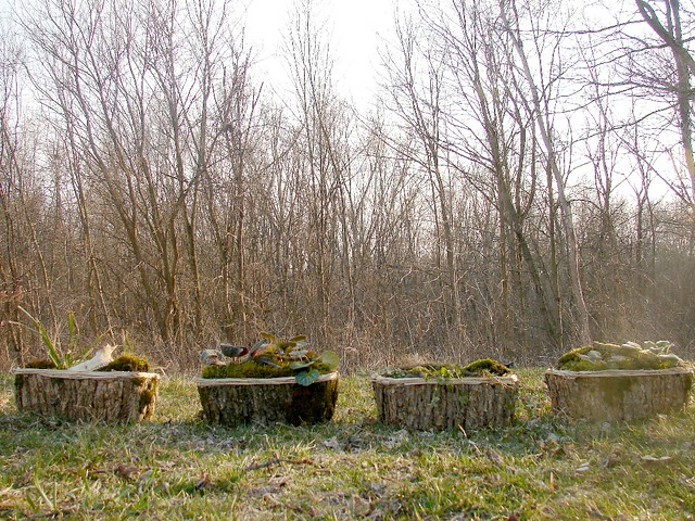 wilderness garden boxes