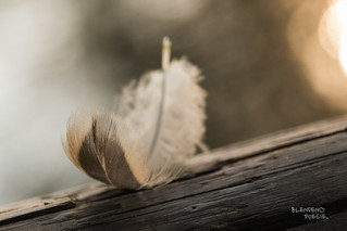Little feather....