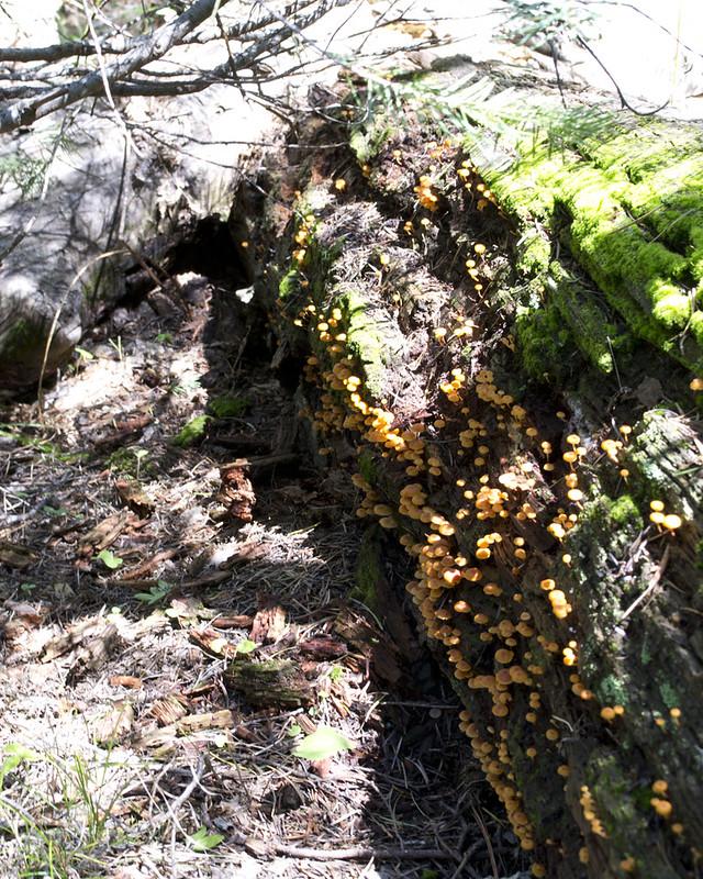 Fungi_Log_0827