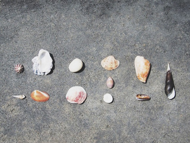 The Seashells