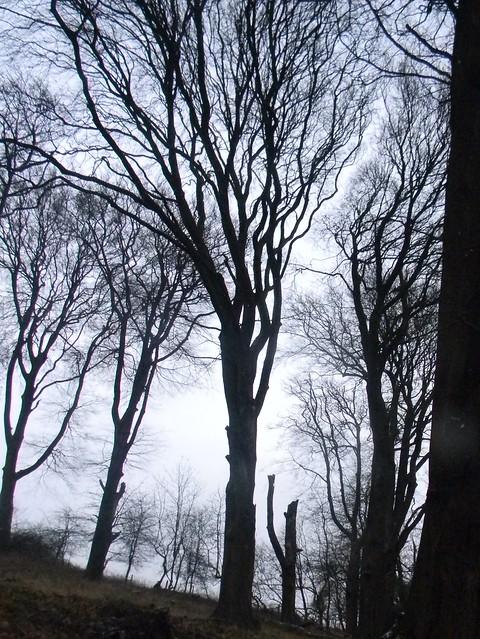 Stark trees