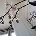 Phalaenopsis vista dal basso
