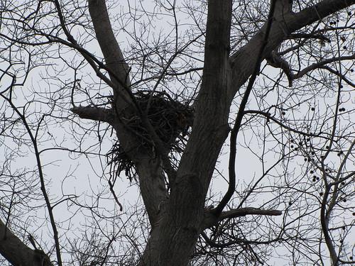 Morningside Nest