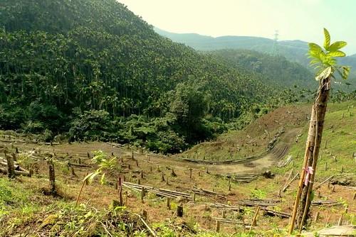 人工造林 V.S  自然復育地