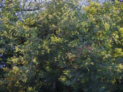 DSCN6043 - Spring Flowers