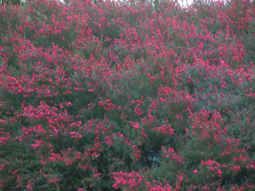DSCN6056 - Spring Flowers