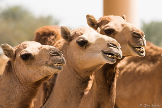 Smile!... You're on Candid Camel!