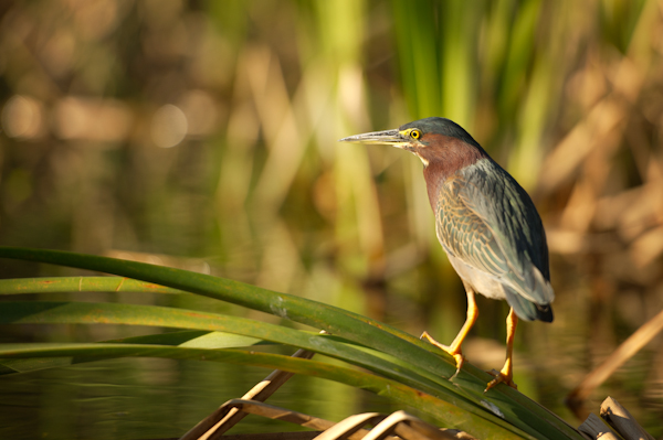 RYALE_Everglades-083