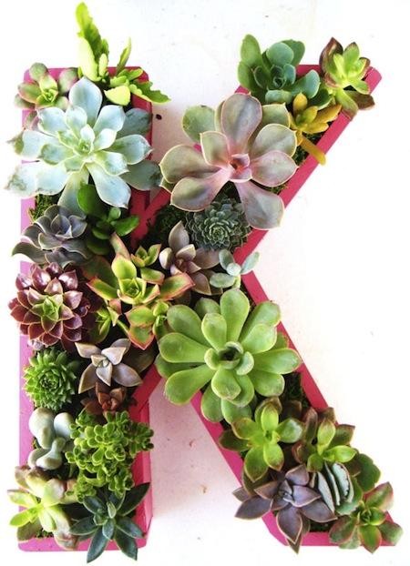 Plant A Vertical Succulent Garden